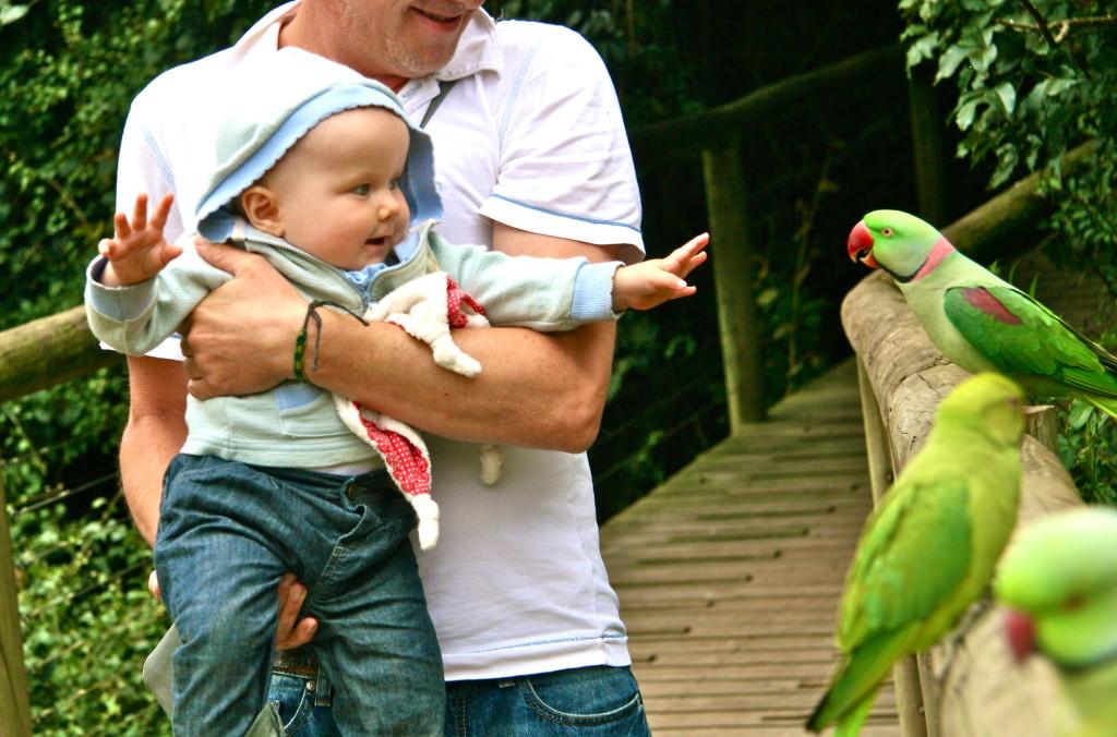 """Im """"Birds of Eden"""", einer gigantischen Voliere voller exotischer Vögel."""