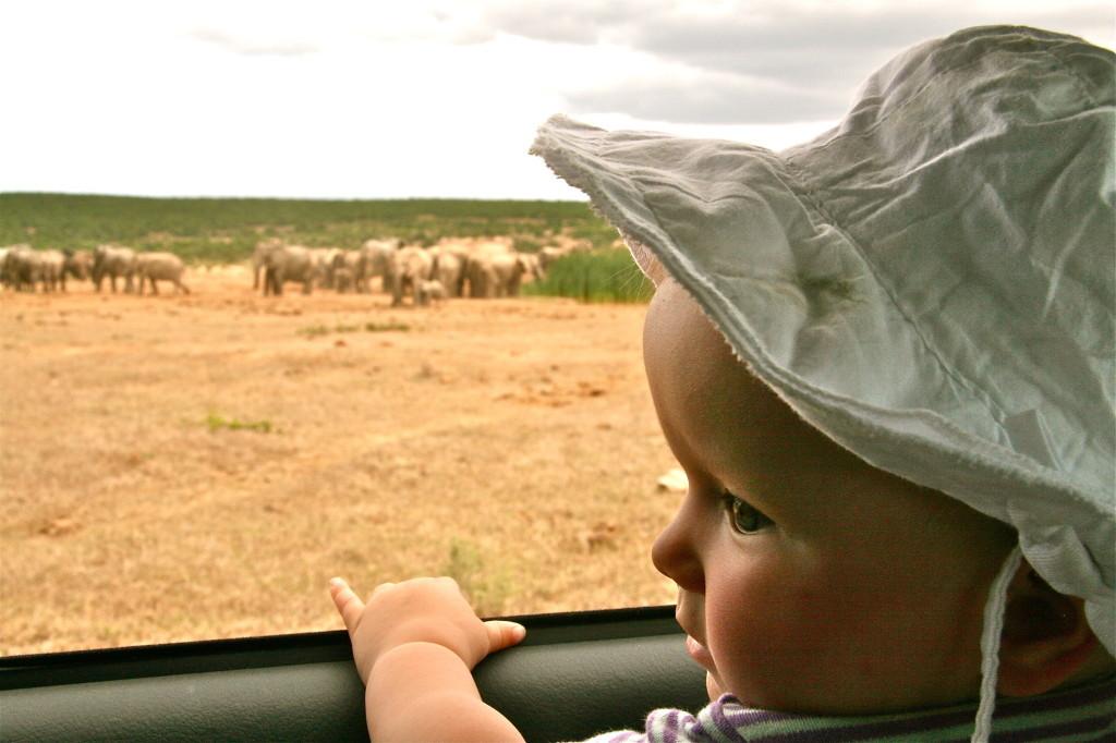 Südafrika mit KIndern: Im Addo Elephant Park