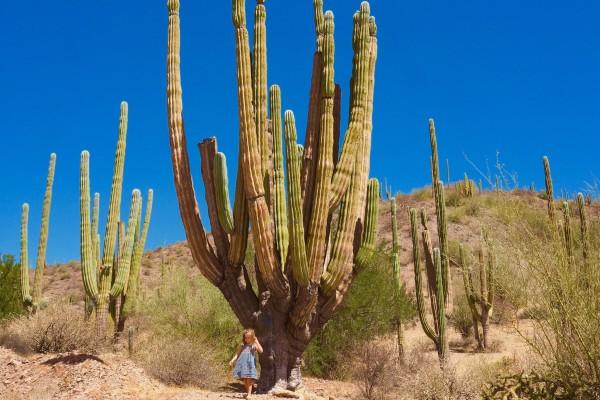 Baja California mit Kindern
